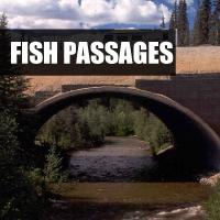 Fish Passages Button